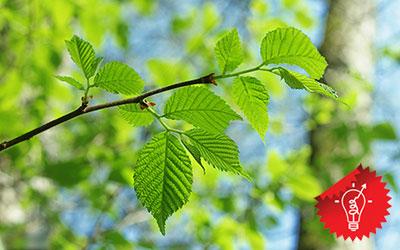 Лист дерева как признак чистоты и минималистичного дизайна